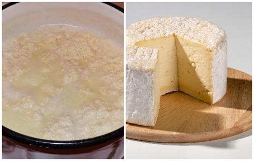 Как сделать сыр из молока дома твердый