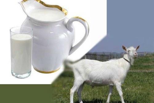 Из козьего молочка