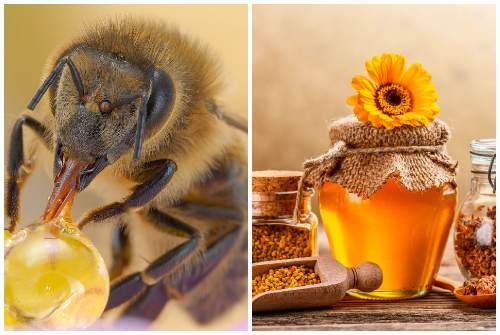 пчелиный дар