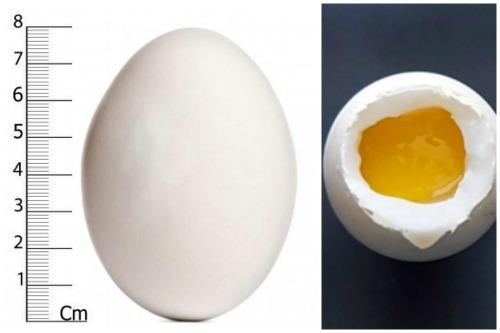 Гусиное яйцо снаружи и внутри