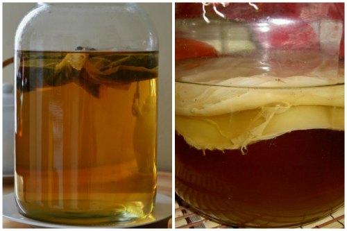 Выращивание из чая