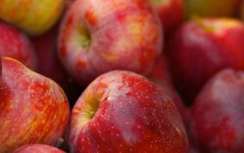 красные спелые яблоки