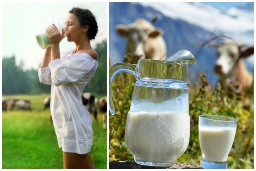 цельное молоко