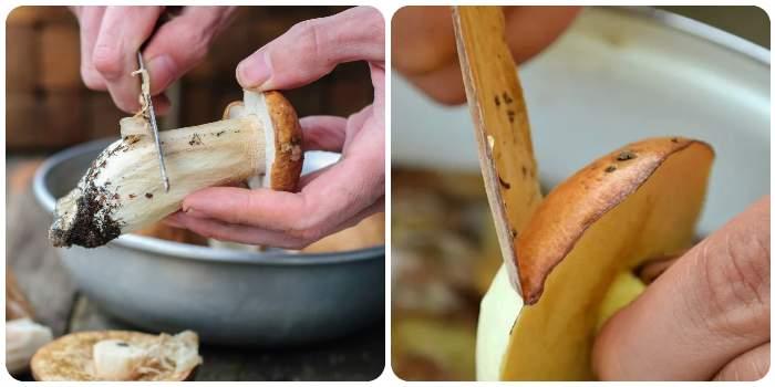Чистка белых грибов и маслят
